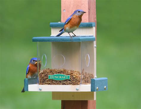 top 28 blue bird seed blue jay feeder woodworking