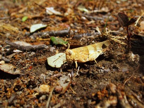 free detailed macro images and stock photos freeimages free macro grasshopper or cricket 2 stock photo freeimages