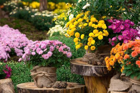 fiori a novembre fiori autunnali a novembre i magnifici 5 donnad