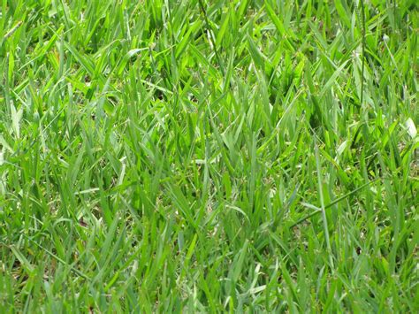 the 5 best grass types for tallahassee fl lawns lawnstarter