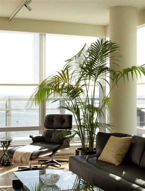 interior design palm indoor palm images which are the typical types of palm