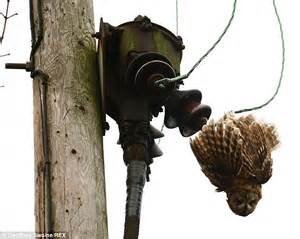 electric cable 1 owl 0 large bird