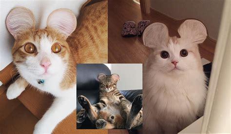Manja World Dosen Kucing di jepang kucing lucu seperti ini sedang bikin onar hati banyak orang akiba nation