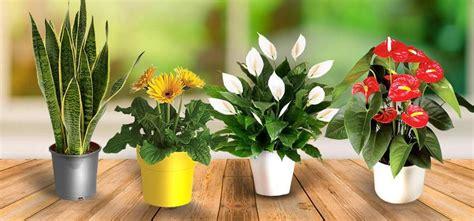 tipos de suplementos  plantas de interior