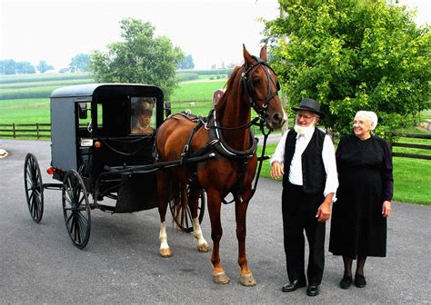 an amish winter home sweet home a visitor when winter comes books amish this is lala land