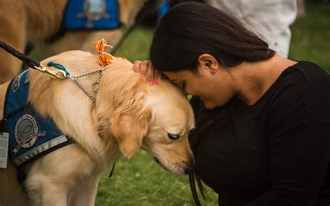 canine comfort photos comfort dogs sent to orlando to help survivors