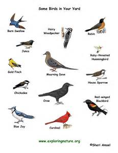 Essay On Different Types Of Birds In by Some Types Of Birds And Their Names Birds Different Types Different Types Of