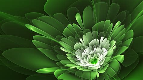 flower wallpaper green rose green flowers wallpapers hd pictures one hd wallpaper