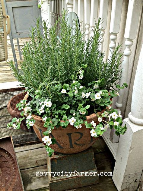 Apartment Deck Plants 289 Best Images About Apartment Deck Balcony Garden On