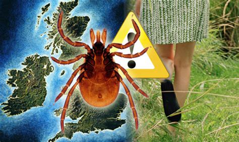 lyme disease expectancy statins don t cut deaths risk says leading professor health