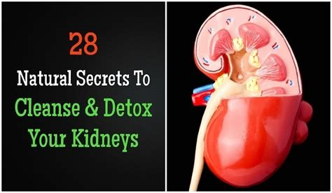 How To Detox Your Kidney Naturally At Home by 28 Secrets To Cleanse Detox Your Kidneys