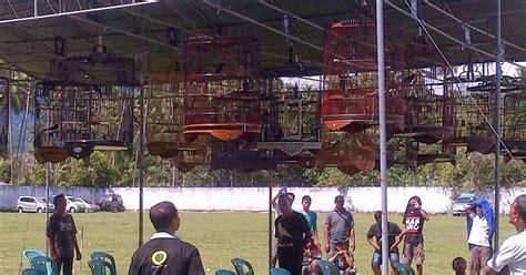 Harga Pakan Burung Pleci Import selisih jauh harga cucak jenggot cucak rowo dan cucak ijo