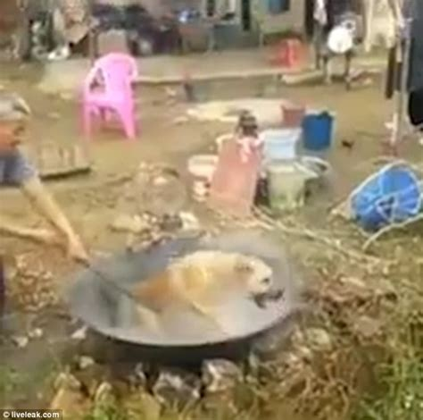 boiling dogs in horrifying moment farmer cooks a live in boiling water for