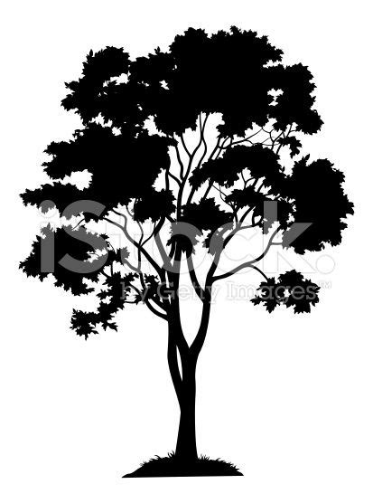 Maple tree with leaves and grass, black silhouette on