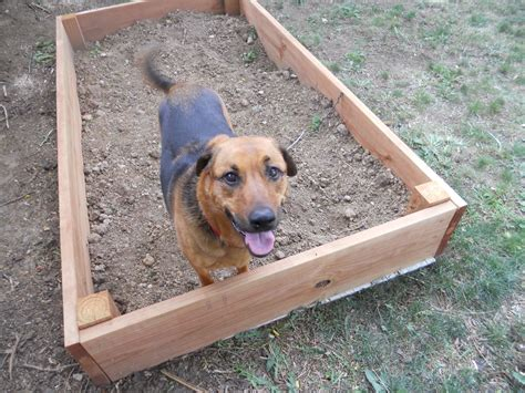 dogs dig it articles archives walking mobile grooming and pet sitting serving connecticut