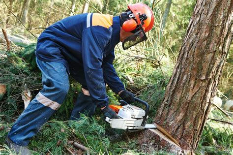 how to cut a tree how to cut a tree with a chainsaw air tool