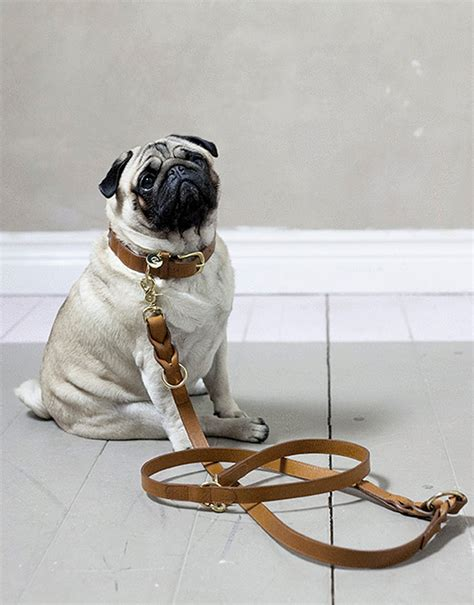 accessories for pugs beautiful accessories for dogs and 79 ideas bloglovin