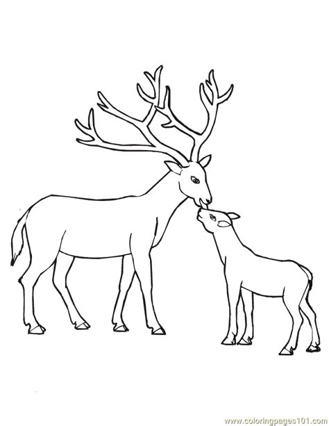 whitetail deer coloring pages az coloring pages