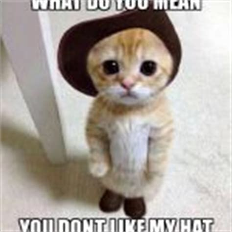 Mean Kitty Meme - mean cat meme creator image memes at relatably com