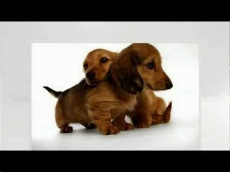 places to buy puppies where to buy a puppy find unique place to buy a puppy popscreen