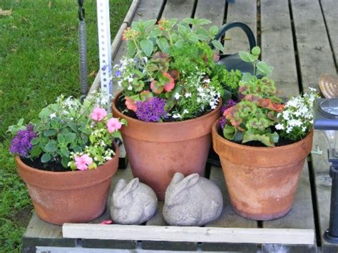 container gardening pdf guam sustainable agriculture resource page