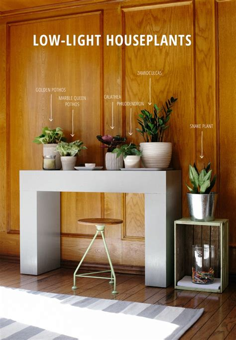 plants for dark rooms 25 best ideas about low light houseplants on pinterest
