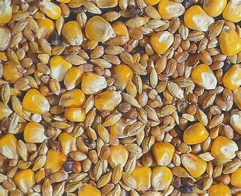 welk keukenafval voor kippen silkie garden verzorging zijdehoenders zijdehoen