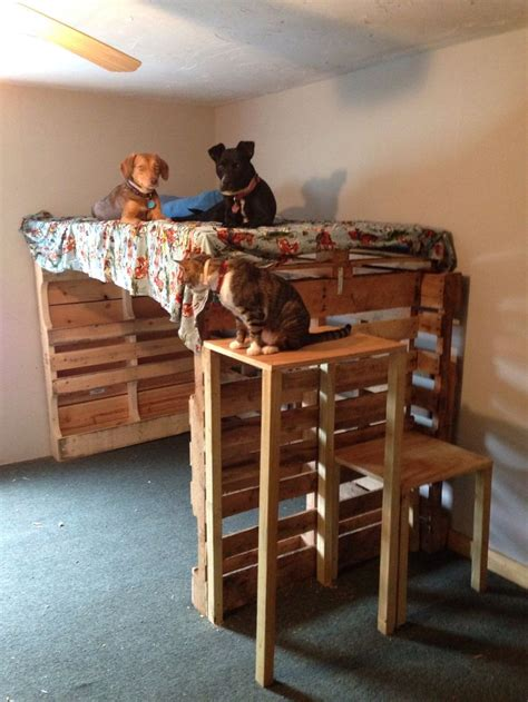 Bunk Bed For Dogs Best 25 Bunk Beds Ideas On Cat Bunk Beds Bunk Beds For 3 And Rooms