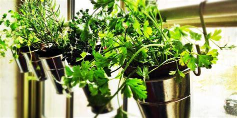 erbe aromatiche in casa erbe aromatiche come coltivarle in casa best5 it