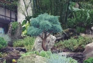 Large rare and unusual ornamental specimen tree nursery hickory