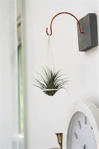 hanging air plant suspended air plant disc hanging plant holder by