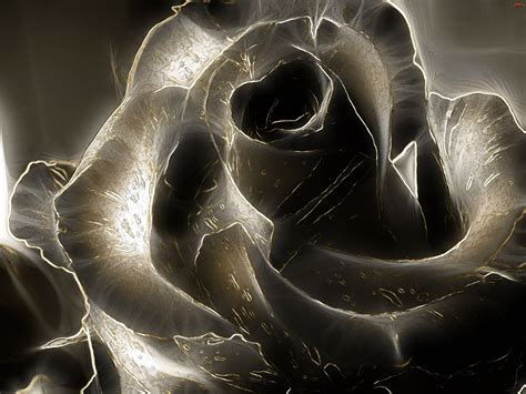 imagenes en 3d negras black rose wallpapers wallpaper cave
