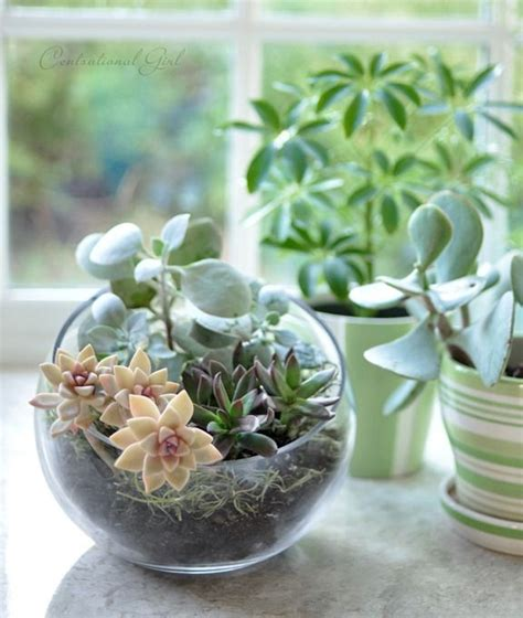 Dome Home Interiors 25 ideas for tabletop gardens and terrariums pretty