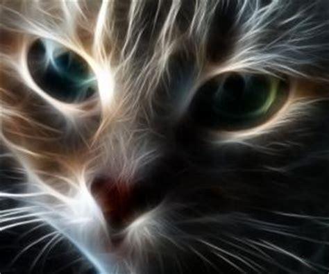 magic cat magic cat kittyware magic cat kittyware