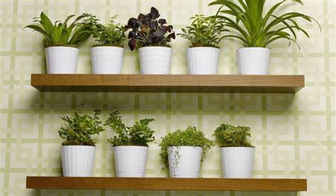 arredare casa con le piante arredare con le piante zanatta alberto