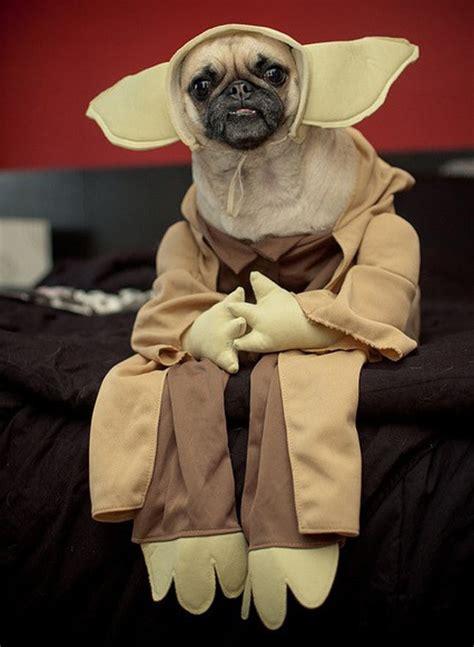 baby pug costume 100 genius pet costumes for brit co