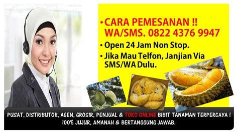 Bibit Durian Musang King Jogja wa sms 082243769947 jual bibit durian musang king bogor