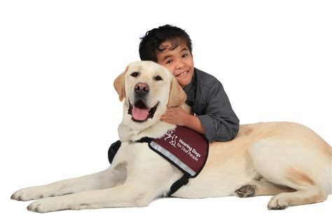 hearing dogs hearing dogs there to lend a helping paw deaf interpreter services