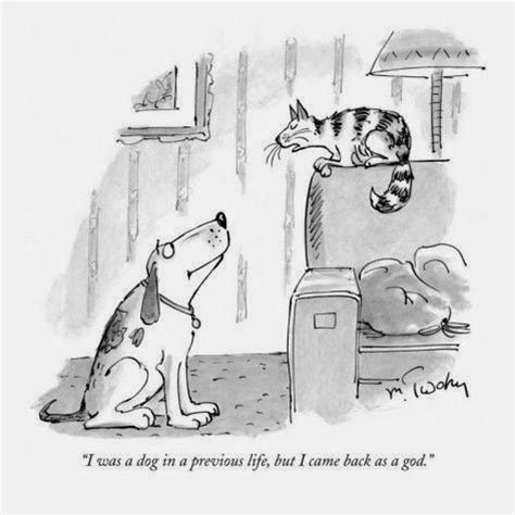 Best Place To Post Resume Online by World S Funniest Cat Cartoons Funny Joke Pictures
