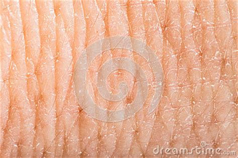 up human skin macro epidermis texture stock image search photos and photo clip up human skin macro epidermis stock images image 36429614