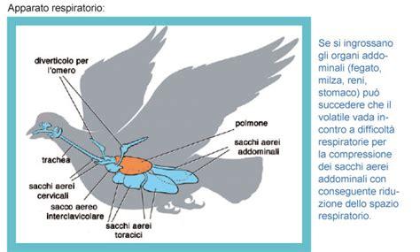 temperatura interna corporea la respirazione negli uccelli