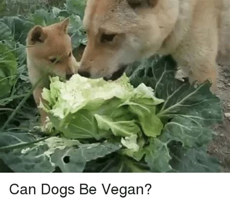 can dogs be vegetarian vegan memes of 2016 on sizzle dank