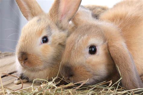 rabbits  companionship