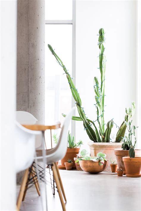 5 plantes d int 233 rieur faciles d entretien lili in