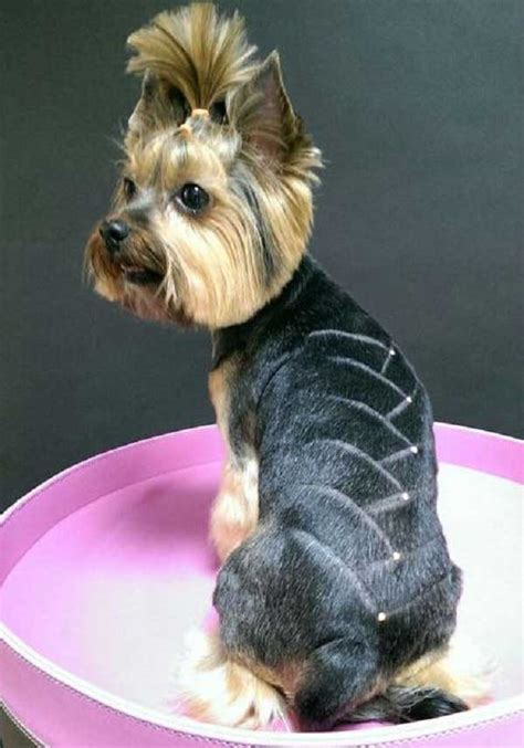 yorkie dog hair styles pictures of yorkies haircuts haircuts models ideas