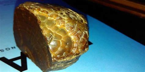 Batu Akik Mirip Kulit Monyet geger ditemukan sisik ular di dalam batu akik merdeka