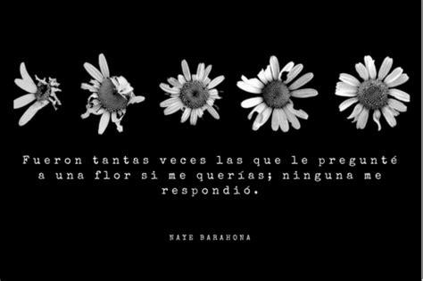 imagenes tumblr margaritas im 225 genes de flores margaritas hermosas con frases de amistad