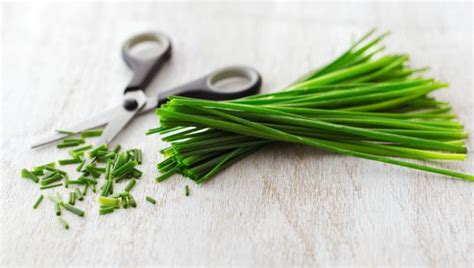 chive com bbc food chives recipes