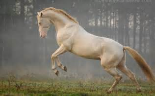 akhal teke colors 24 horses with the most and beautiful coat colors