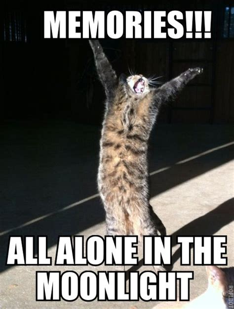 Singing Cat Meme - 21 best cats the musical images on pinterest cats